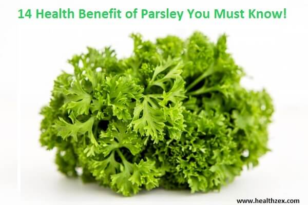 14 Health Benefit of Parsley You Must Know!